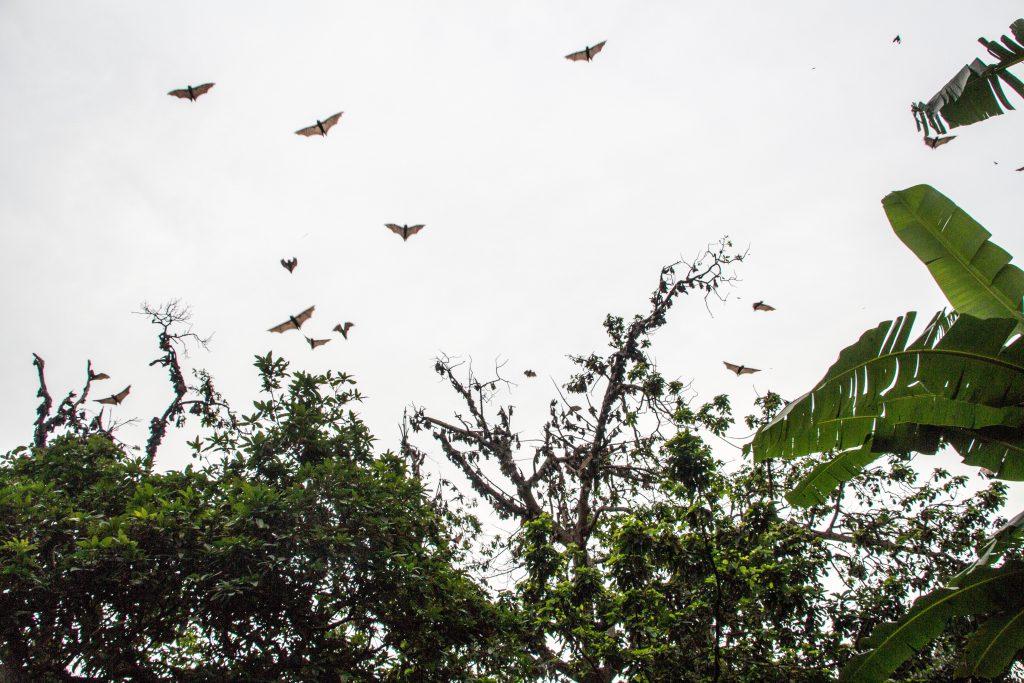 Bats Kpalimé