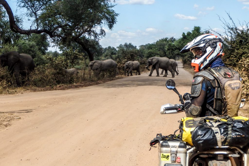 On our way to Chipata, elephants crossing the track