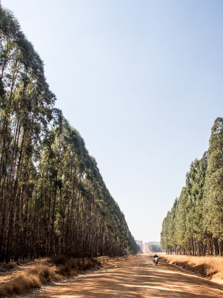 Pine wood is big business in Swaziland